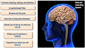 The Reticular Activator and You.